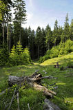 forest landscape royalty free stock images