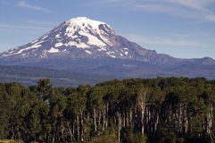 Forest Landscape Adjacent Ranch Countryside Mount Adams Cascade. Mt Adams looms over lush ranch land in Washington state Stock Photo