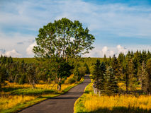 Forest landscape with asphalt road and big tree Royalty Free Stock Photography