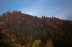 Forest landscape in autumn. Late October in the mountain regions of northern Romania, Eastern Europe in the morning Stock Photography
