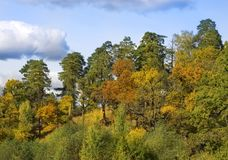 Forest landscape autumn. Mixed forest - pines, oaks and shrubs stock photo