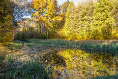 Forest landscape at autumn morning Stock Photos