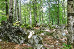 Forest landscape. Beech trees and large white stones in the forest, in the national landscape natural park in the mountains stock photo