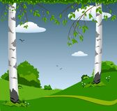 Forest landscape with birches Stock Image