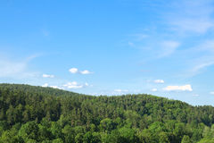 Forest landscape. With blue sky Royalty Free Stock Photo