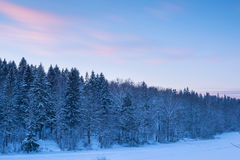Forest landscape and blur clouds in sunset sky at snow winter se Royalty Free Stock Photography