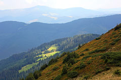 Forest landscape in the Carpathian mountains. Ukraine Royalty Free Stock Photography