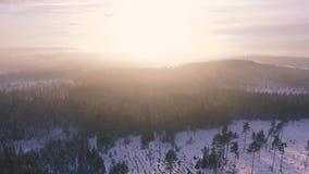 Forest landscape dawn sun sunshine. Video of forest landscape dawn sun sunshine stock footage