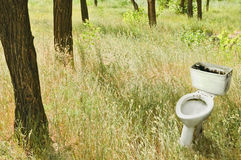 Forest landscape: dirty toilet among the trees Stock Photo