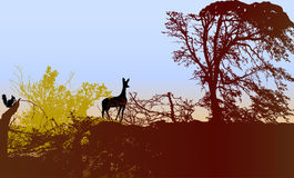 Forest landscape with doe, squirrel and silhouettes of trees and plants Royalty Free Stock Photo