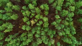 Forest landscape drone view green trees scenery