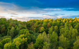 Forest landscape Stock Photography