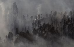 Forest Landscape After een Brand stock afbeelding