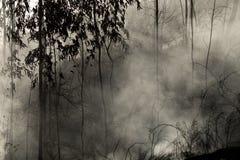 Forest Landscape After een Brand royalty-vrije stock afbeeldingen