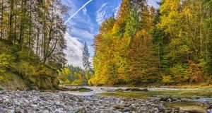 Forest landscape with fall foliage Royalty Free Stock Photos