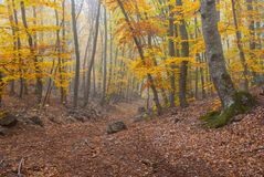 Forest landscape with fog in Crimean mountains Royalty Free Stock Photos