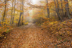 Forest landscape with fog in Crimean mountains Stock Photos