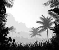 The forest landscape of foggy with palm tree Stock Images