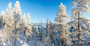 Forest landscape, frozen trees in winter in Saariselka, Lapland Finland. Forest landscape, frozen trees in winter in Saariselka, Lapland, Finland royalty free stock image