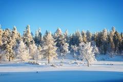 Forest landscape, frozen trees in winter in Saariselka, Lapland Finland. Forest landscape, frozen trees in winter in Saariselka, Lapland, Finland stock image