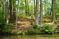 Forest landscape. Green forest by the water Royalty Free Stock Photography