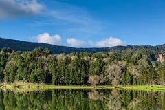 Forest Landscape hermoso con el lago y las montañas Imagenes de archivo