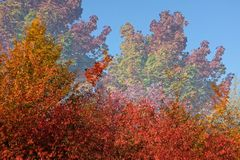 Natural flamboyant orange shades of a forest at fall stock photography