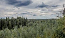 Finnish forest. A Finnish forest landscape near central Finland city of Jyvaskyla Royalty Free Stock Photos