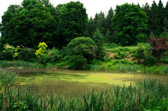 Forest landscape with lake. Green lake surrounded by trees Royalty Free Stock Images