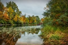 Forest landscape. Lake, trees. plants, cane, and trees and dramatic cloudy sky. Autumn calm day on the lake. Small house in the forest royalty free stock images