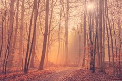 Forest landscape with mist and sunrise Royalty Free Stock Photography