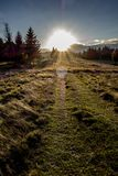 Sunset in the countryside Forest landscape stock images