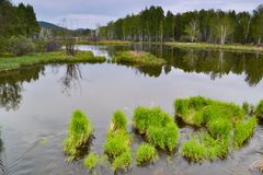 Forest landscape. Mountain lake with green plants in the water Royalty Free Stock Image