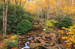 Forest Landscape North Carolina Blue Ridge Mountains. Autumn landscape of forest and mountain stream in the Blue Ridge Mountains of North Carolina Stock Images