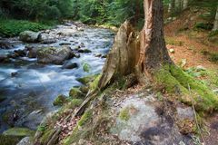 Forest landscape with river. Beautiful water river stream landscape in a green forest Royalty Free Stock Photo