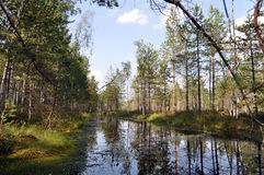 Forest landscape with river Stock Photo