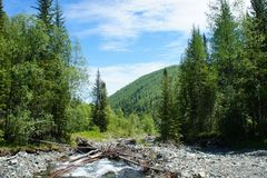 Forest landscape of the Sayan Mountains. Siberia. Stock Photos