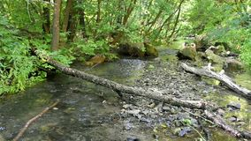 Forest landscape with small stream and fallen trees. Forest landscape with a small stream and fallen trees stock video
