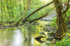 Forest landscape with small stream and fallen trees Stock Photos