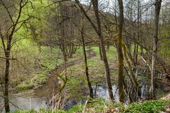 Forest landscape with small stream Royalty Free Stock Photo