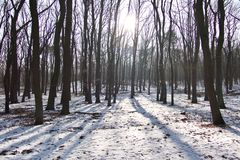 Forest landscape with snow and sunburst. Forest landscape with a light dusting of snow on the ground and sunburst through the trunks of the trees casting long Royalty Free Stock Images
