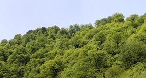 Forest landscape Royalty Free Stock Photos