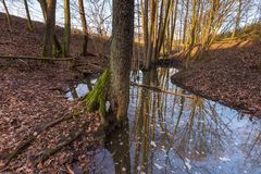 Forest landscape with stream and beavers dam Stock Photos