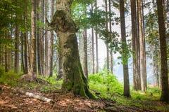 Forest landscape in summer Stock Image