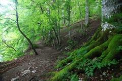 Forest landscape Stock Image