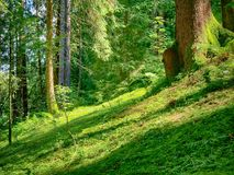 Forest landscape summer Royalty Free Stock Photos