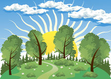 Forest landscape with sun Stock Image