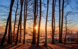 Forest, Landscape, Sun, Trees Royalty Free Stock Photos