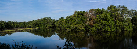 Forest Landscape Sungei Buloh fotografia stock libera da diritti