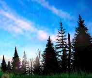 Forest landscape on a sunny day Royalty Free Stock Image
